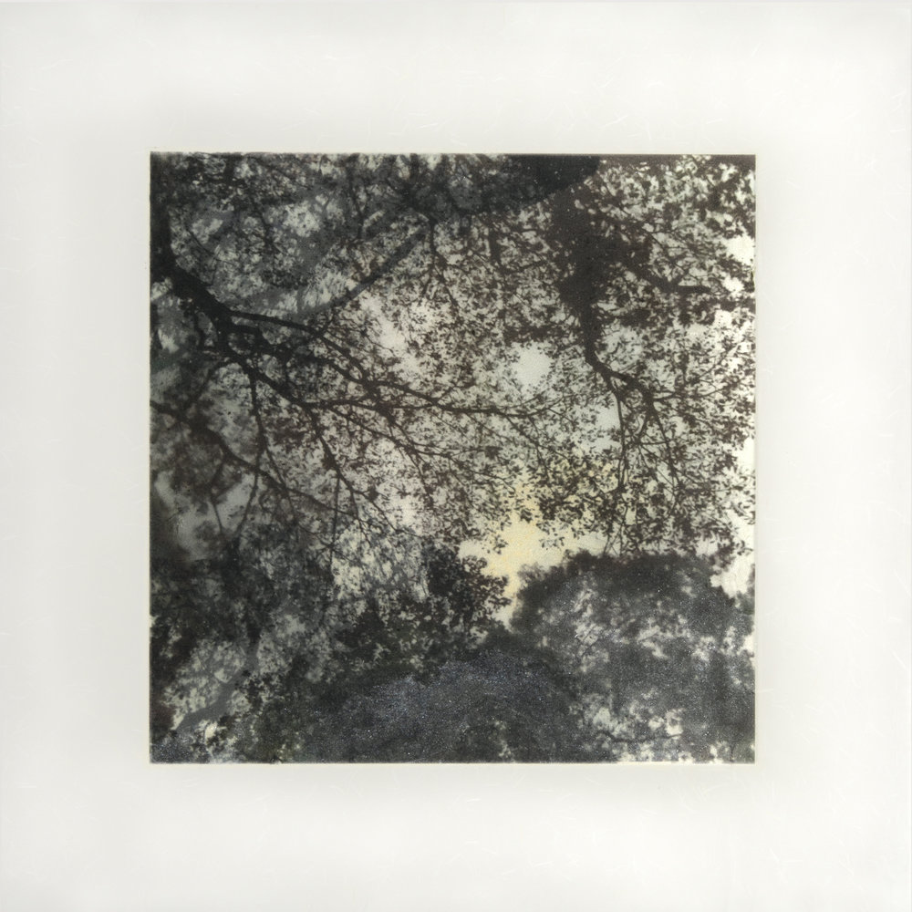 """Samaan Tree Tobago I, 18"""" x 18"""", 2017"""