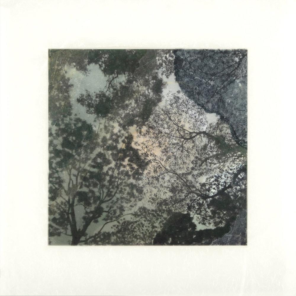 """Samaan Tree Tobago II, 18"""" x 18"""", 2017"""