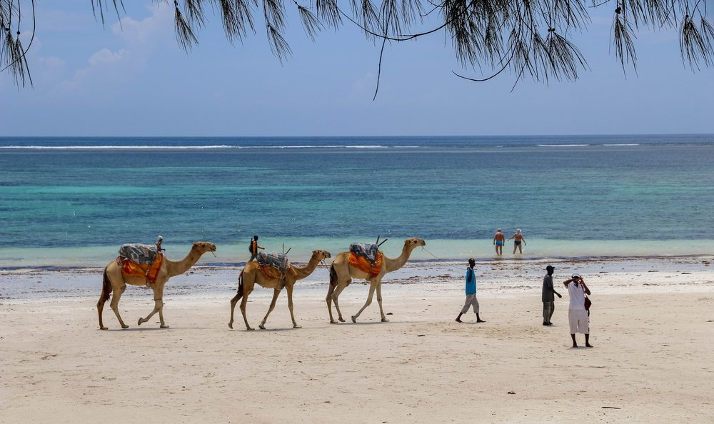 MOMBASA- KILIFI - DIANI. - 3 NIGHTS ON THE COAST. You'll visit Fort Jesus to learn about the history of colonization along Kenya's coast and the role it played in the slave trade. You'll also explore Mombasa's charming Old Town, with its spice markets, tuk-tuks, and narrow streets. A day trip to Diani will give you a chance to relax and reflect on a beach with crystal clear waters. During this portion of the trip, we'll be joined by the writers and photographers who are putting the coast on the map.