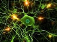 Neurone al microscopio