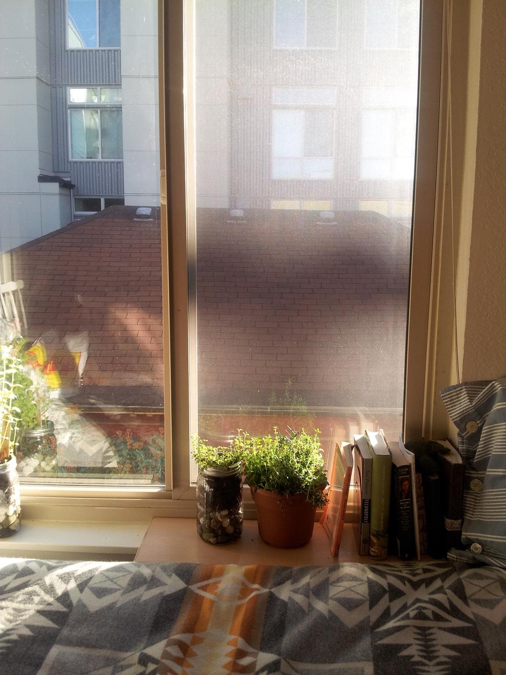 meet the plants | seekthewelfare