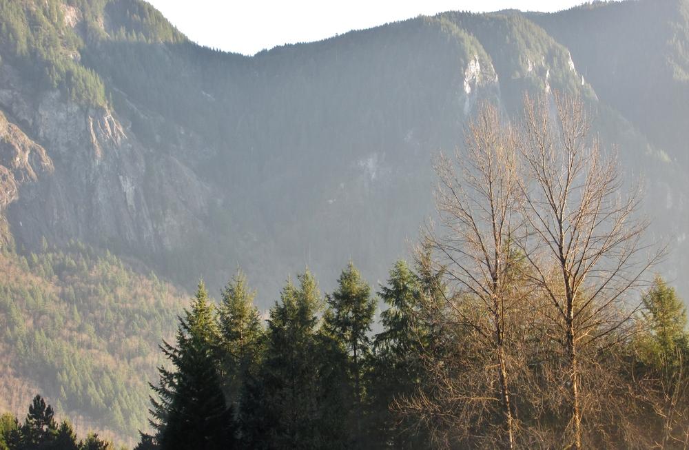 tree hunting | seekthewelfare