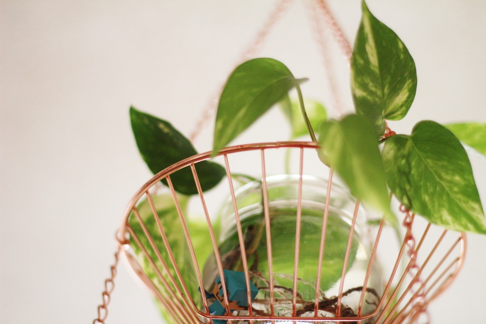 fill apartments with plants | seekthewelfare