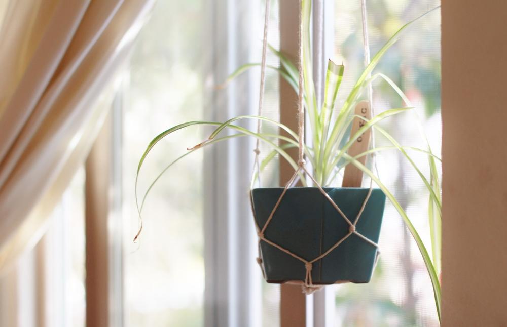 plant hanger | seekthewelfare
