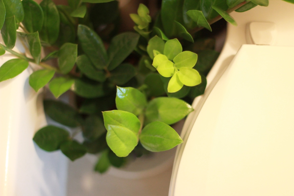 plants in the windowless bathroom | seekthewelfare