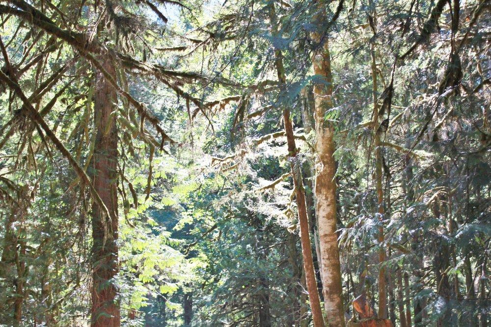 olympic peninsula camping shenanagins | seekthewelfare