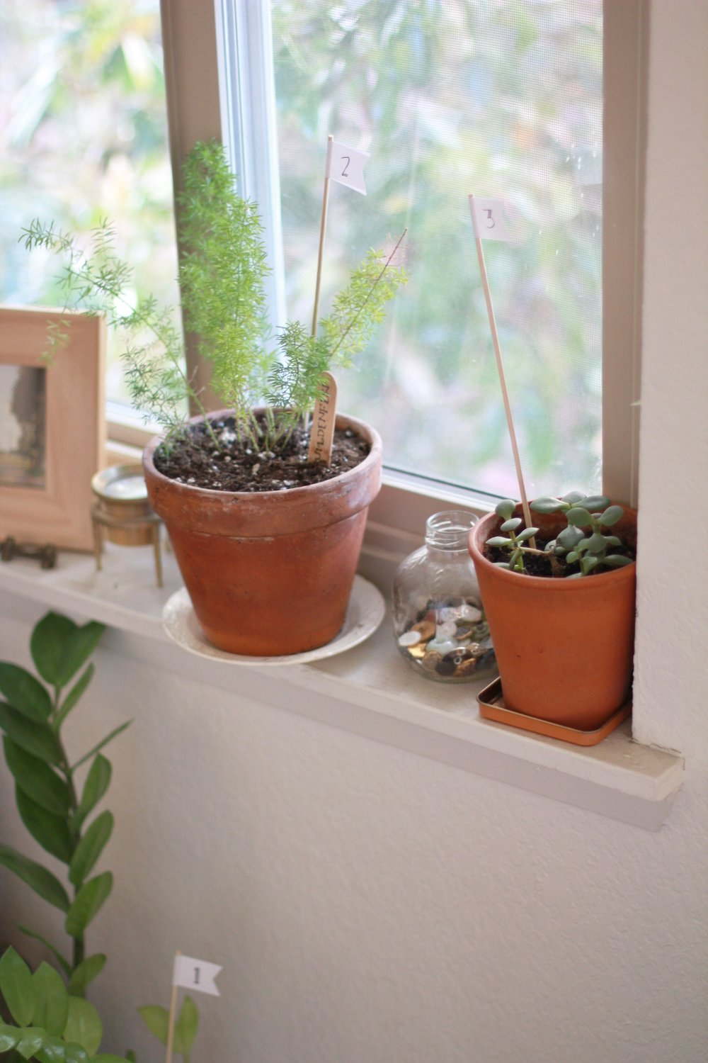 how to help your plantsitter | seekthewelfare