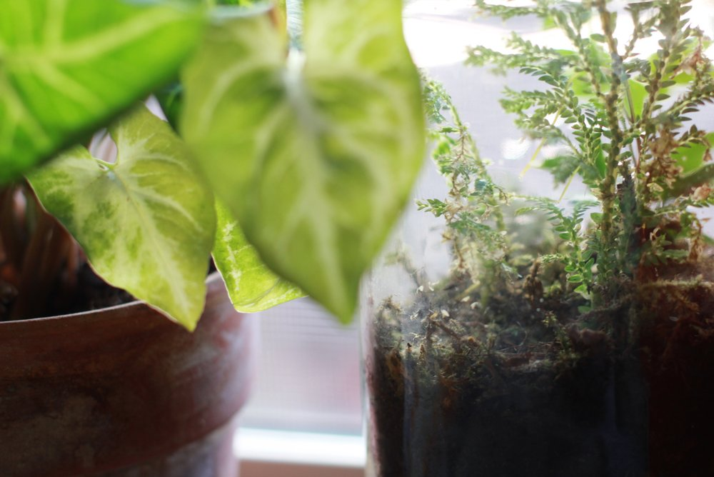 how to set your plantsitter up for success | seekthewelfare