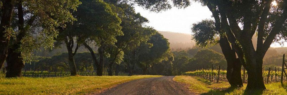 long-meadow.jpg