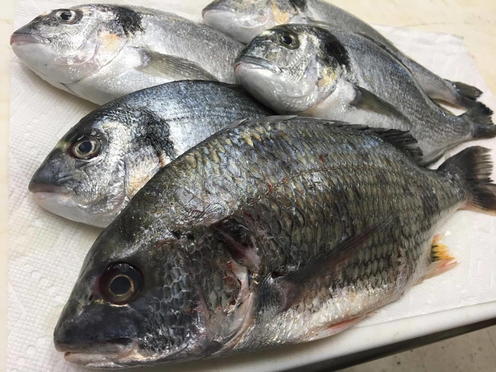 Yellowfin Sea Bream(Wild Caught; Hiroshima, Japan) キチヌ  Dorado(Farm; Portugal) チヌ.jpg