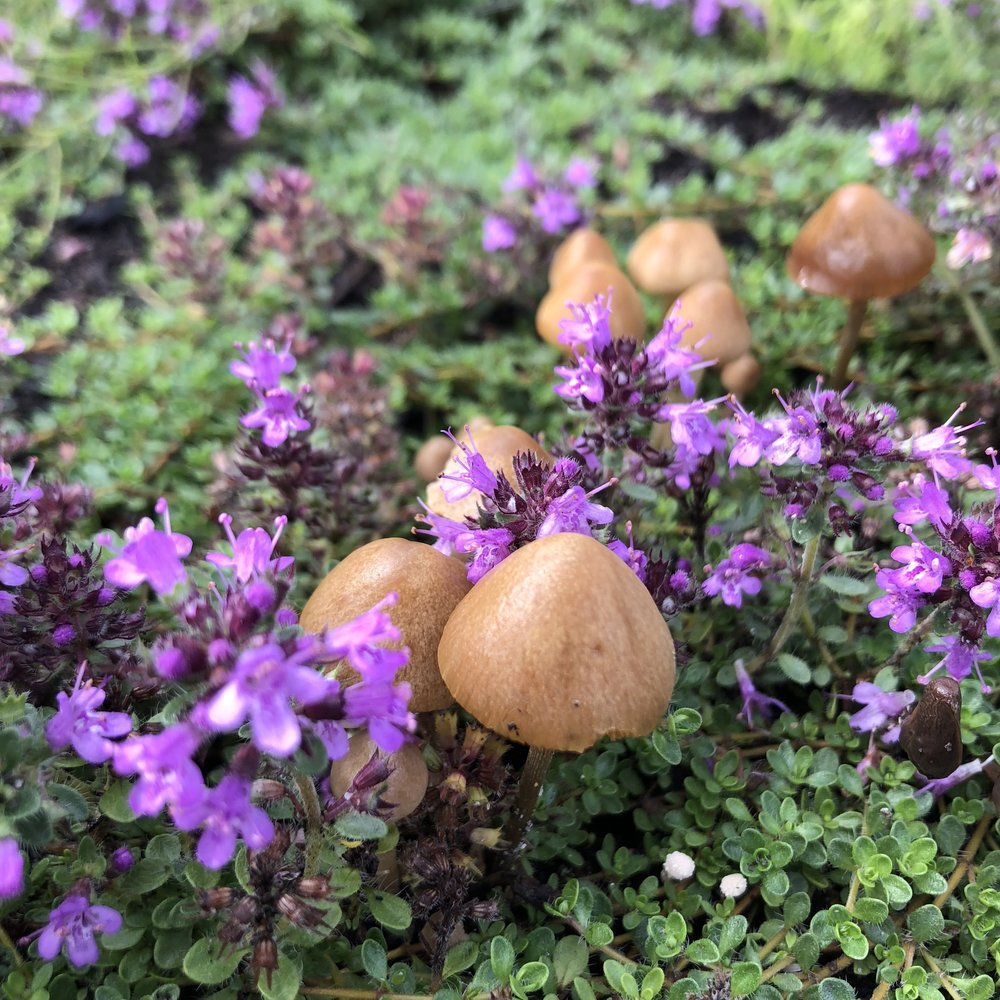 mushrooms and flowers plant medicine.JPEG