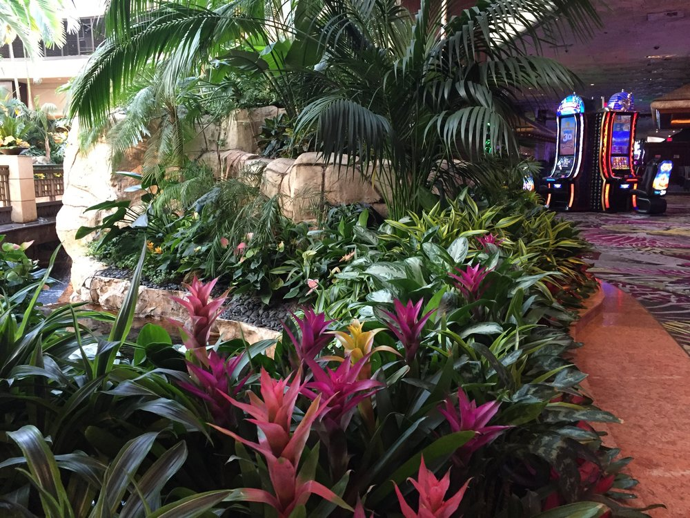Bromeliads next to the slot machines