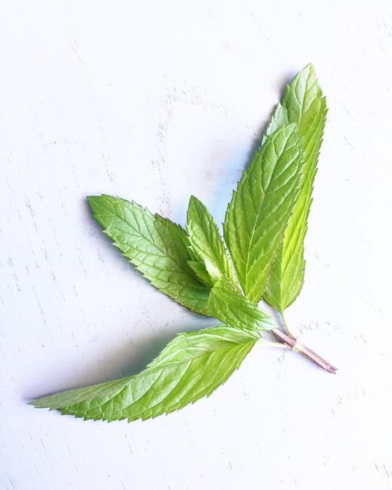 Slender Mint