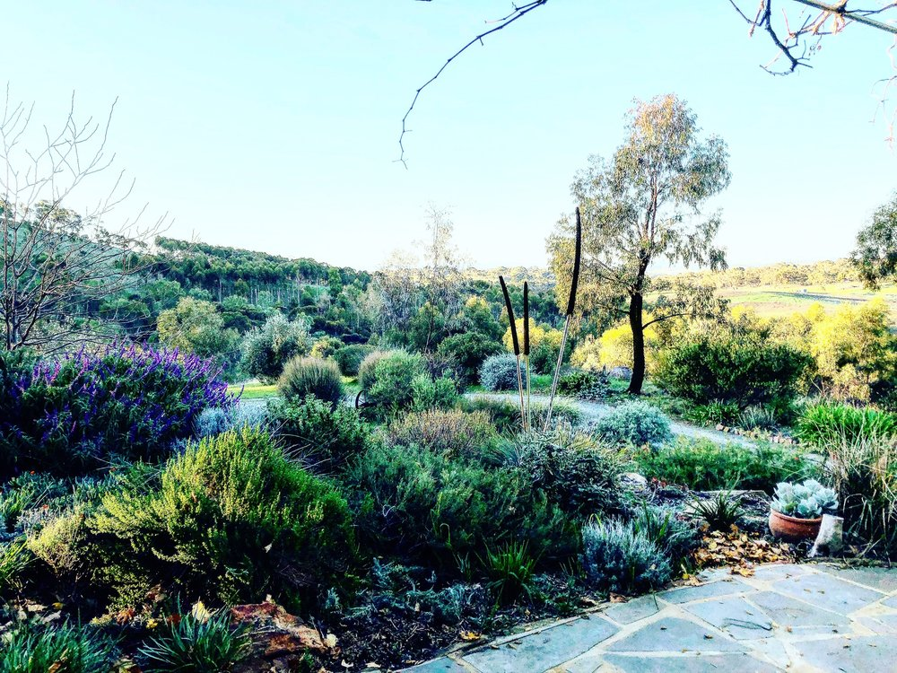 Our beautiful farm is set on 90 acres of native trees and plants in Armagh, Clare Valley
