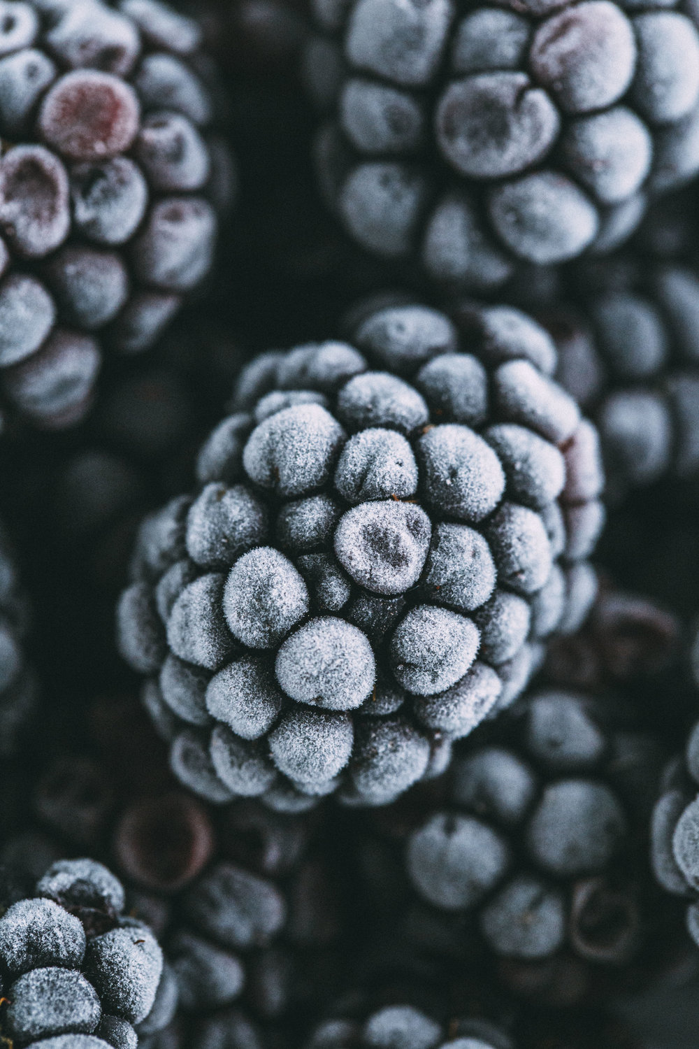 blackberries1 copy.jpg
