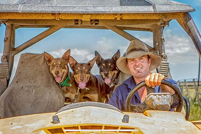 *BREAKING*  Some exhilarating news just through:  So very excited/proud/chuffed/stoked to announce that my image of Tom Ellis, Coola Station and his three kelpies, has just been awarded the Australian Council of Agricultural Journalism (ACAJ) National Star Prize for Excellence in Rural Photography for 2018!!! Tom and his kelpies are now eligible for the International Federation of Agricultural Journalists World Star Prize Awards to be judged at the 2019 IFAJ World Congress in Minnesota, USA in July!! Bring it!  #stockjournal #rmsa #acaj #kelpies #kelpie #farmer  #kelpiesofinstagram #kelpie #farm #australiancouncilofagriculturaljournalists #afajcongress #nationalaward #minnesotaherewecome #minneapolis #julycongress #