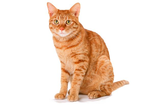 Copy of CATS