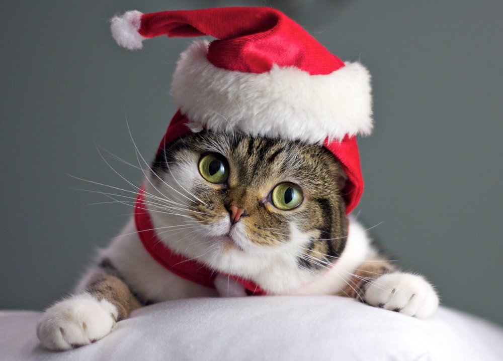 Wishlist for secret Santa: Cat food(wet), baby wipes, toys, bedding, scratching posts, heading pads, treats.  Come see us at Winterwalk in Hudson, NY- Saturday 12/2!!!!