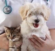 VETERINARIANASSISTANCE -