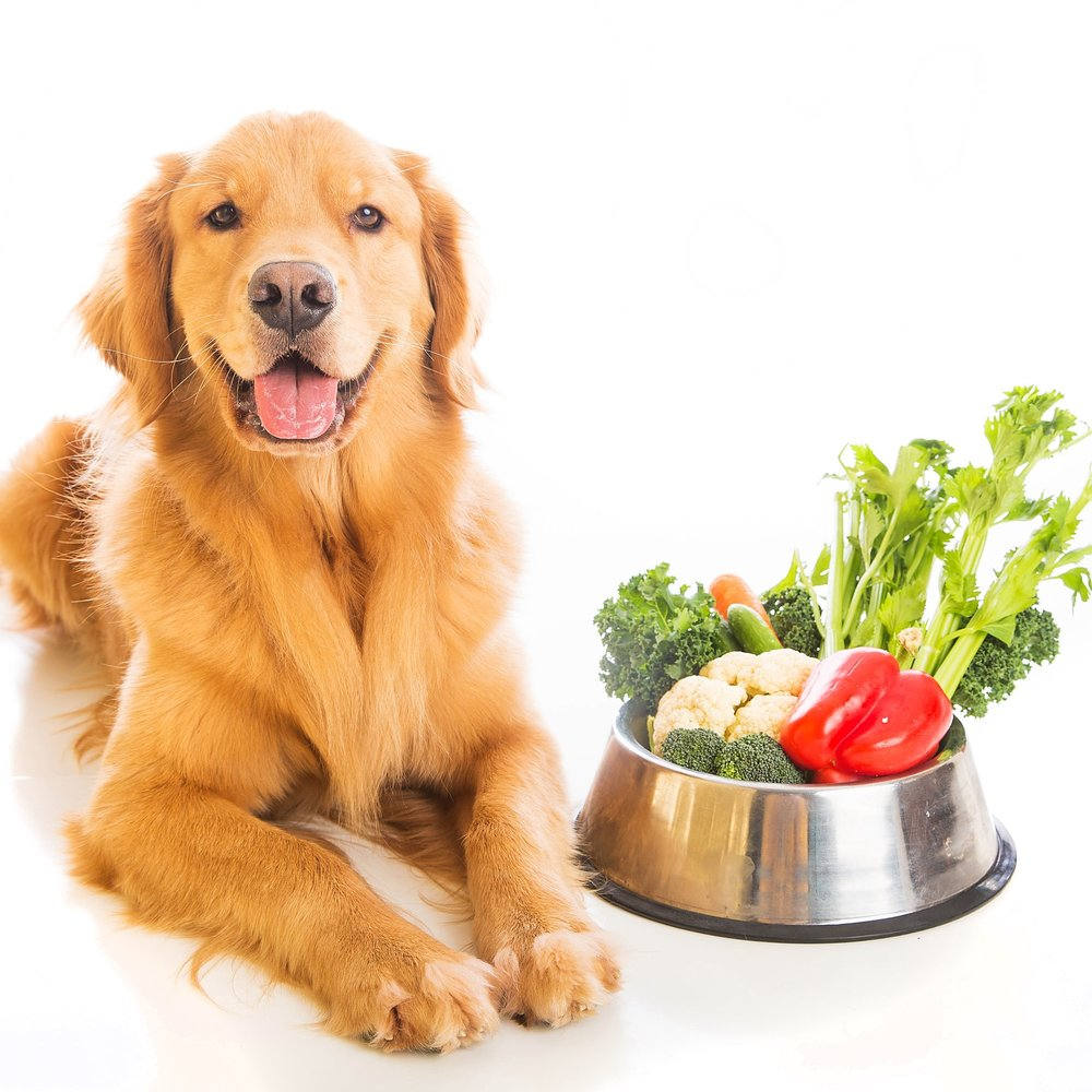 Food Bank - Food is Love.  As part of our community outreach AnimalKind's Food Bank offers pet food to pet owners who are experiencing a (temporary) situation where they cannot afford to feed their pet.