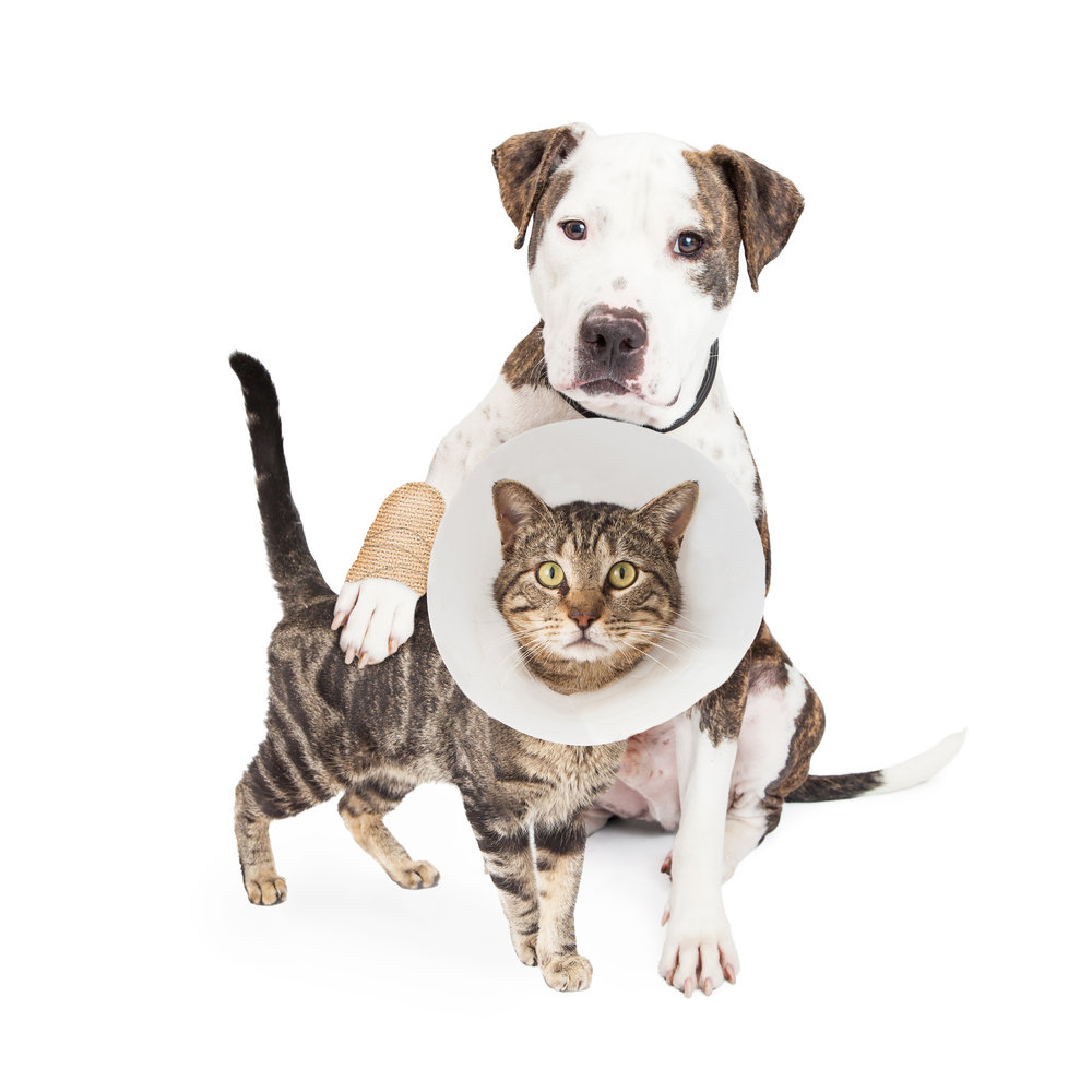 SPAY + NEUTER CLINICS -