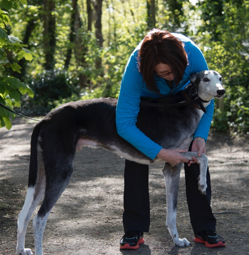 Greyhound and canine osteopath