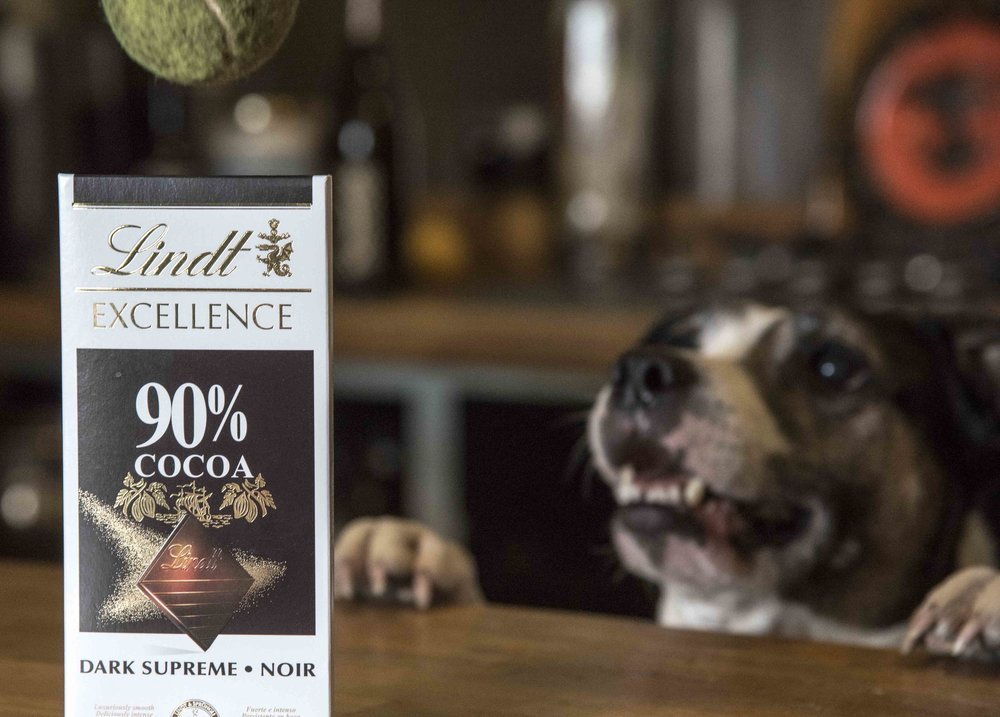 *Tilly isn't after the chocolate, she is after the ball placed BEHIND the chocolate to capture the shot. Nevertheless the 90% chocolate was taken and hidden well away after the photograph was taken. Photo taken by her mistress, photographer  Katie Vandyck