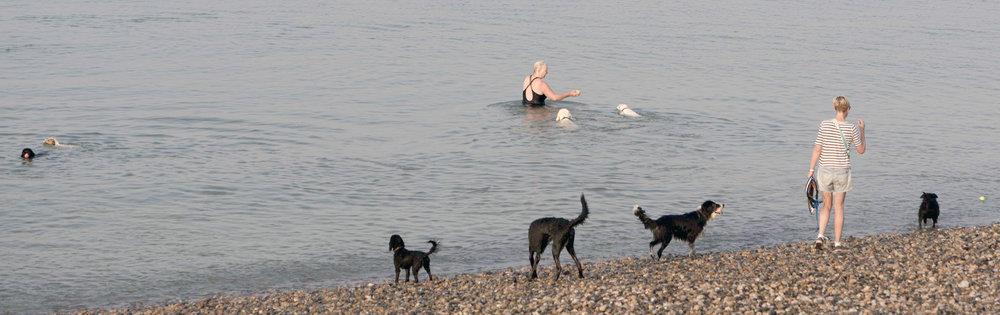 Dogs swimming in the sea.jpg