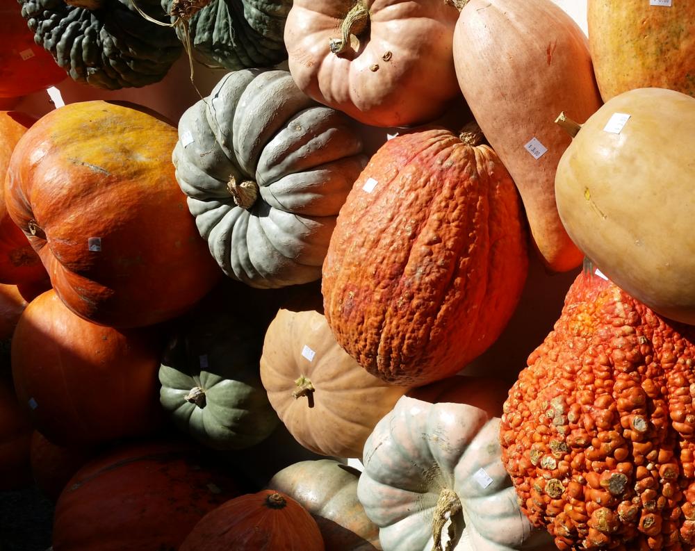 pumpkins2.png