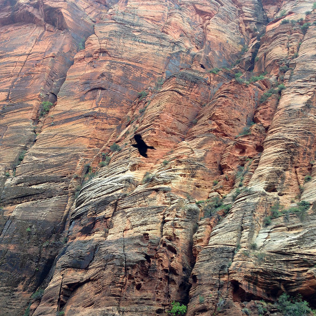 Bird in the air at zion national park