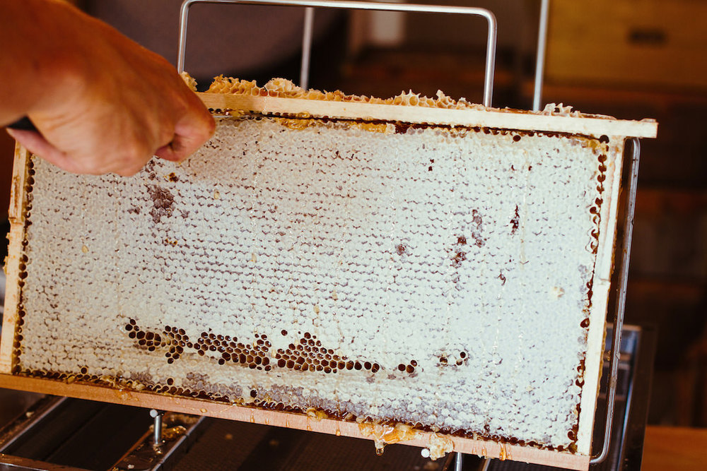 Eine verdeckelte Honig Wabe kurz vor dem Entdeckeln