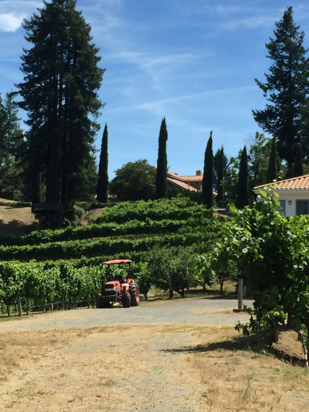 Vineyard with Tractor.jpg