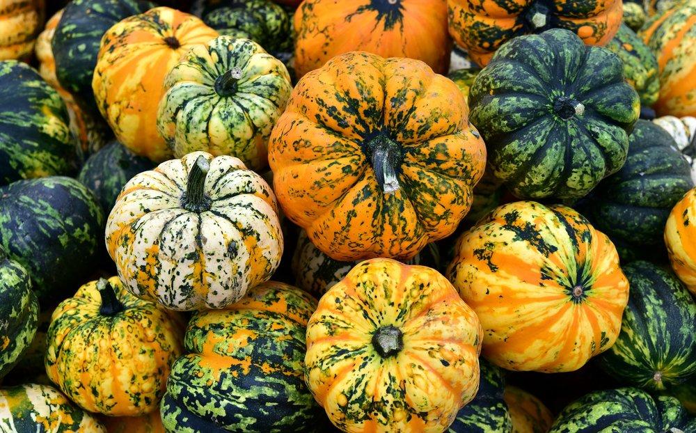 microwave-pumpkin-3663049_1920.jpg
