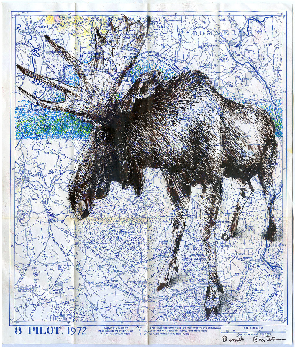 Daniel Baxter Moose drawing.jpg
