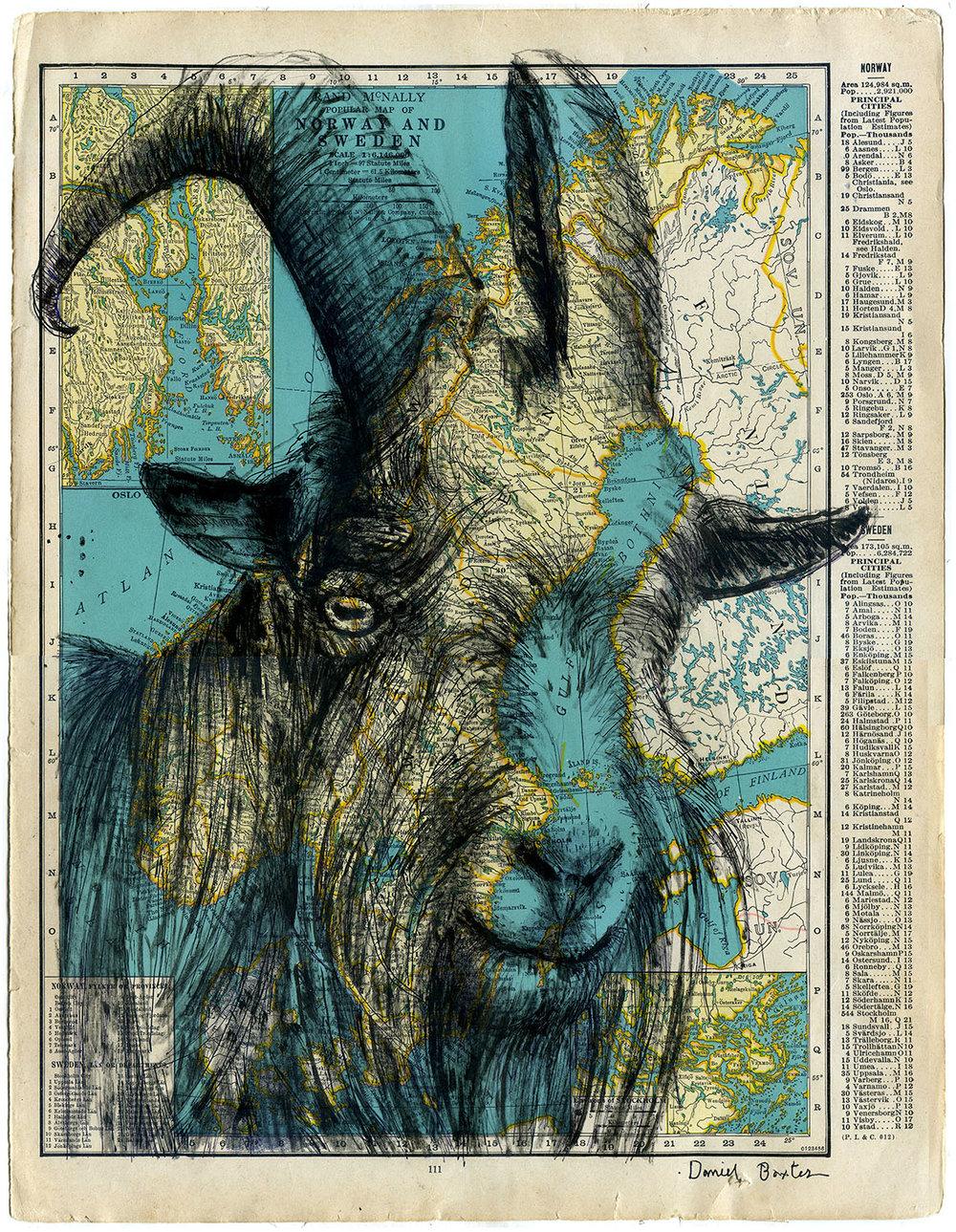 Daniel Baxter Scandinavian Goat.jpg