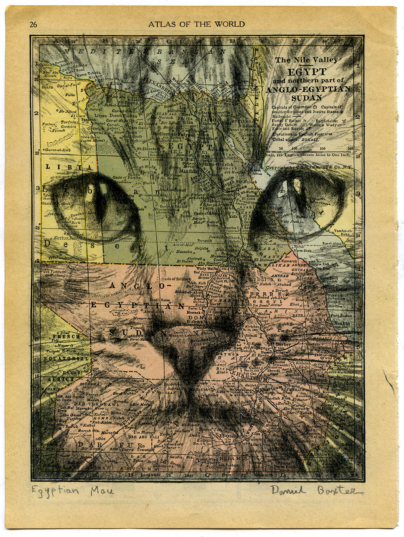 Daniel Baxter Egyptian Mau portrait.jpg
