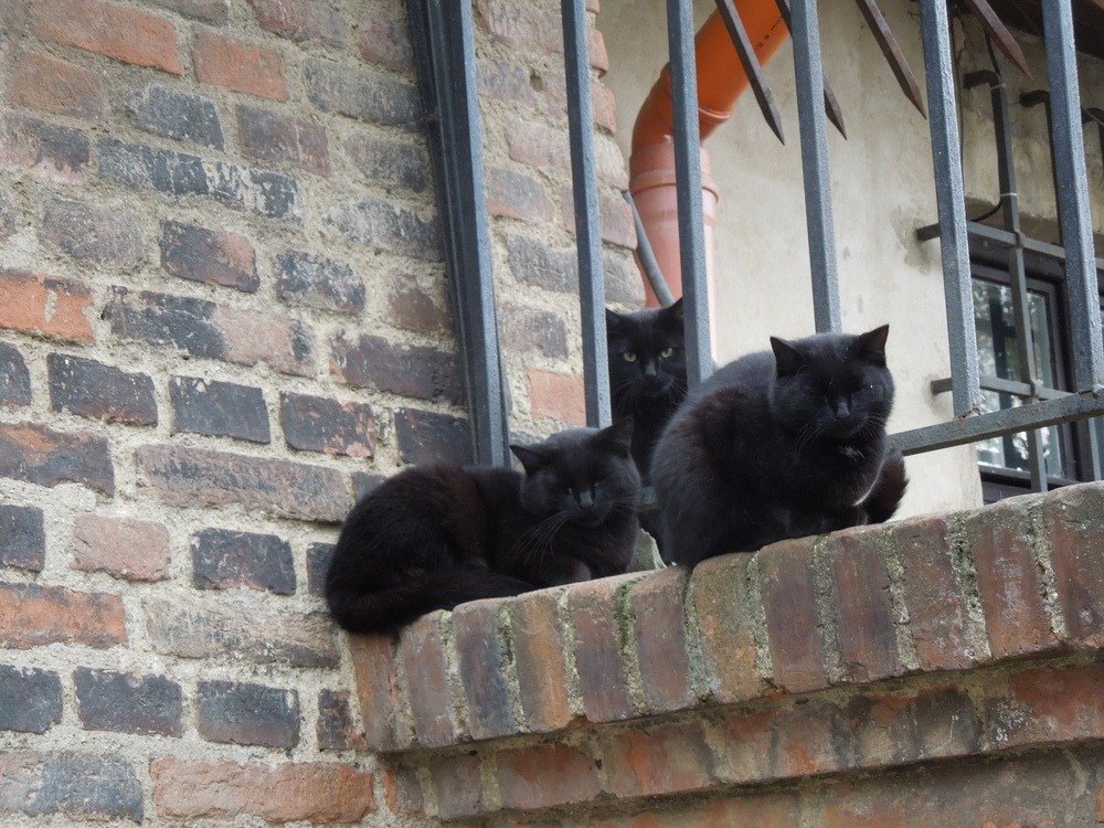 Stevko-Brno-Cats.JPG