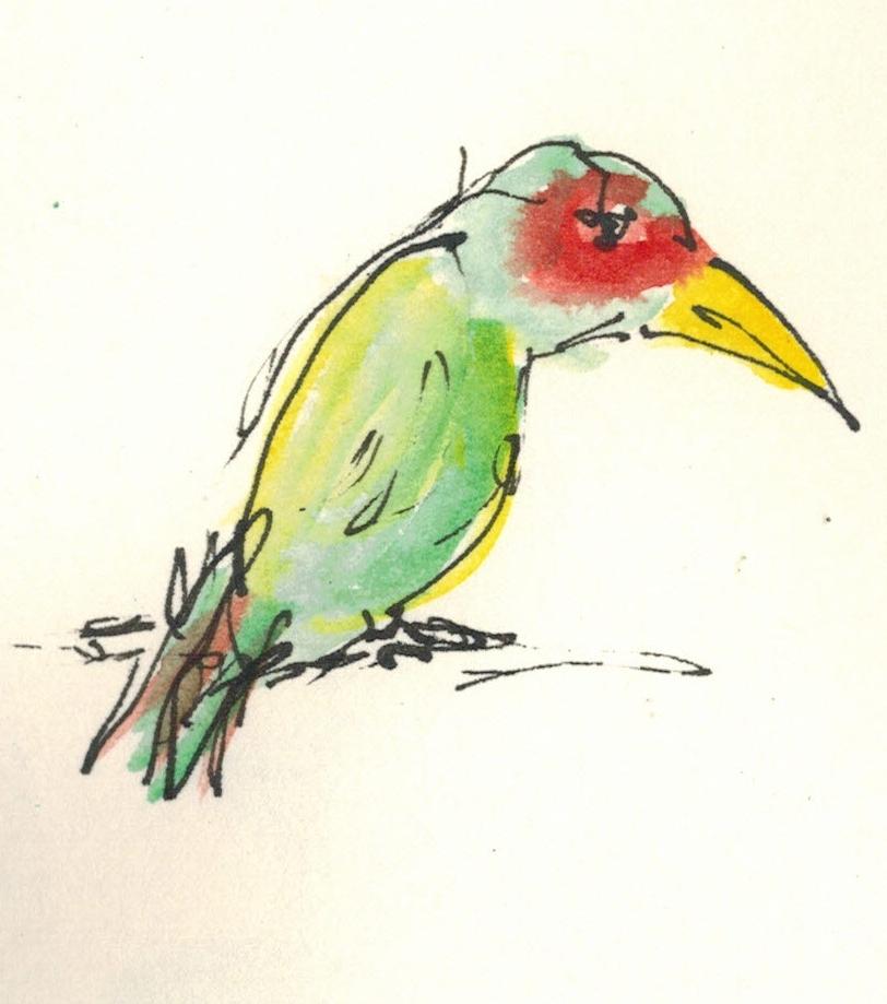 Federvögel