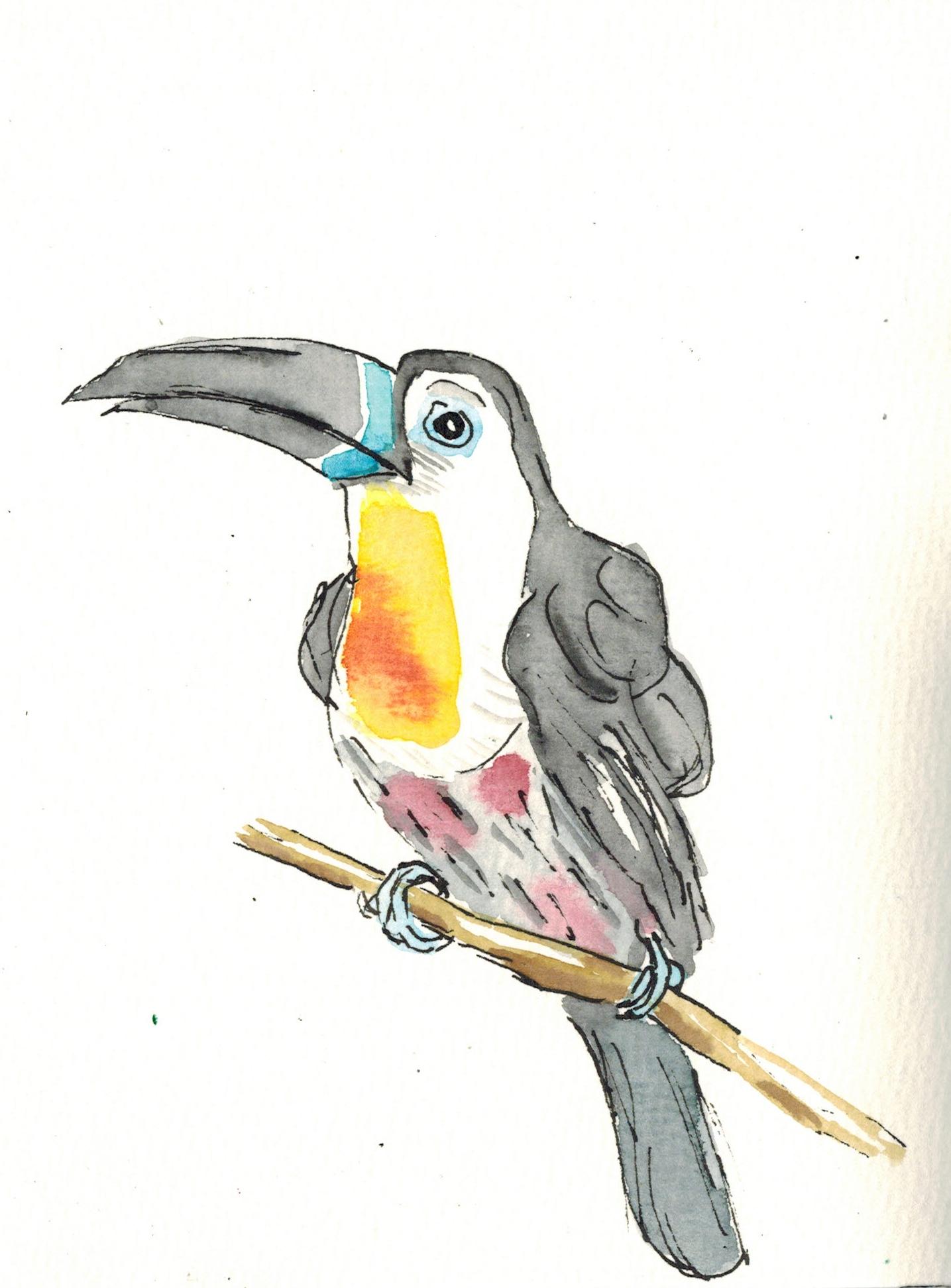 Federvögel3a