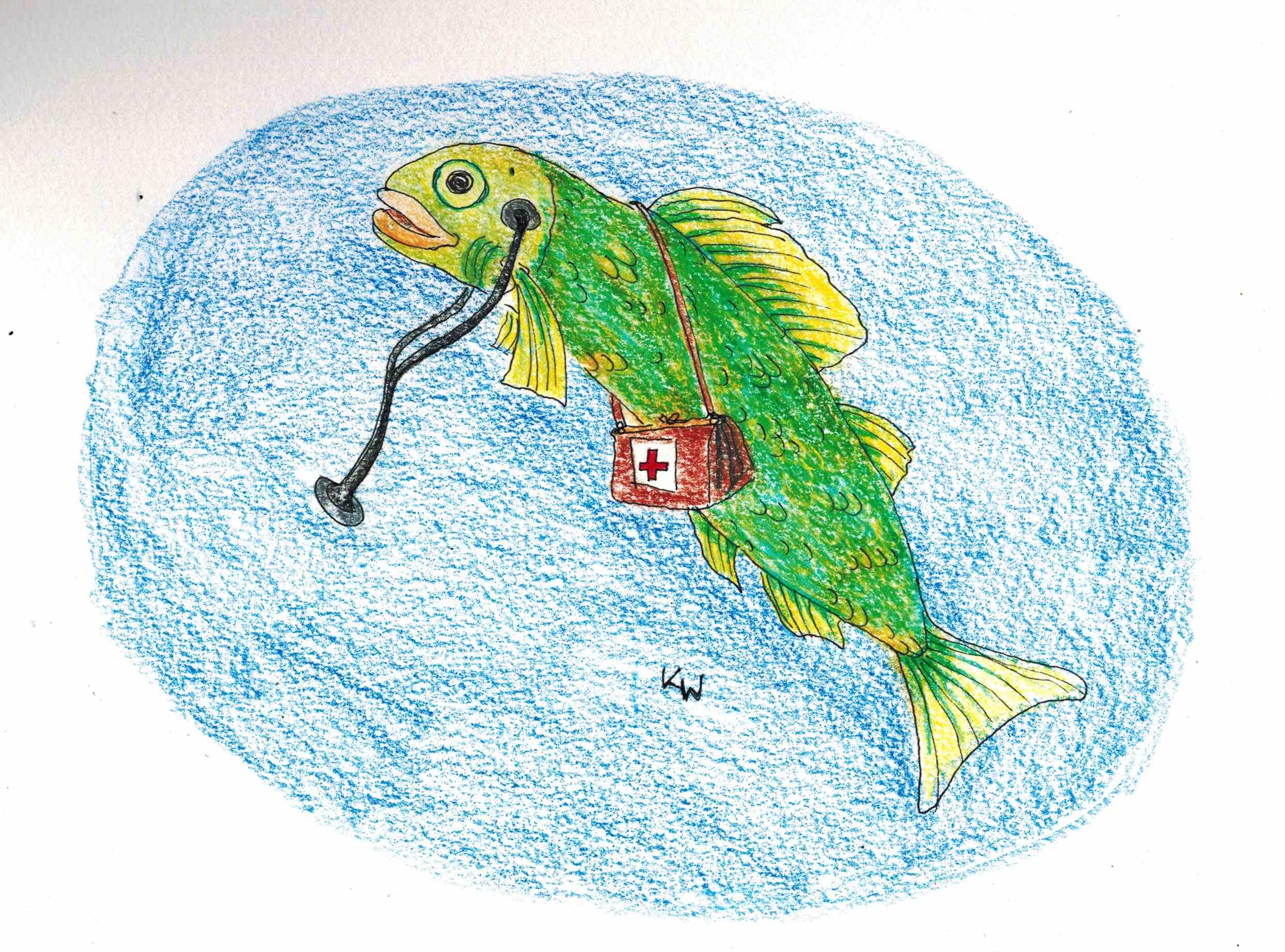 fe11_doktorfisch.jpg