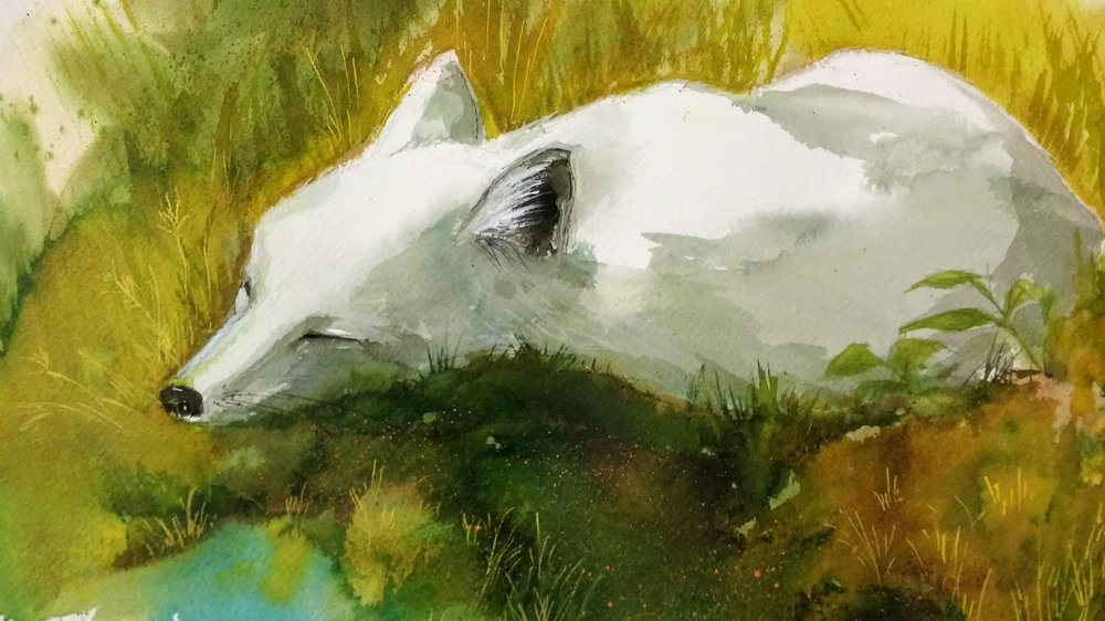 Little White Fox-2017