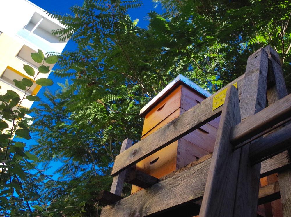 Urban beehive