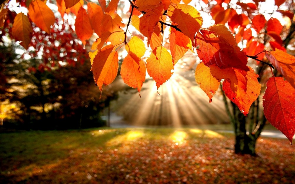 autumn-leaves-wallpapers-photos.jpg