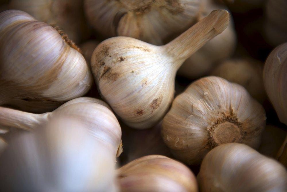 E6Ai8EoSQp2unXHEd1GA_GarlicHarvest.jpg