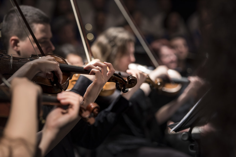 Musicians in an orchestra with violin bows raised and ready.