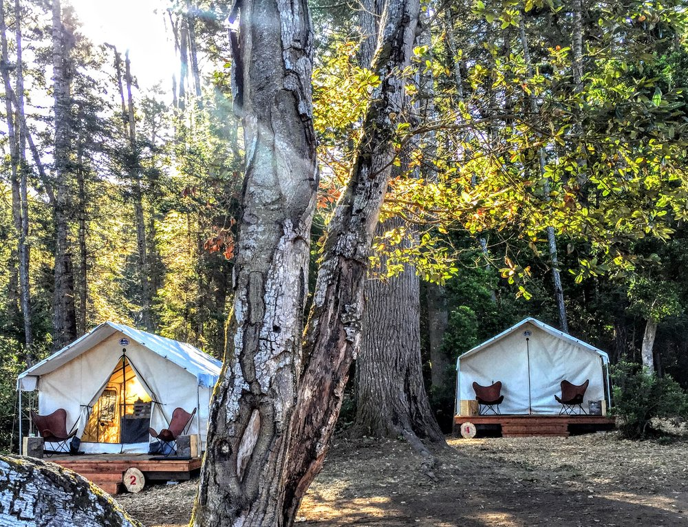 The tents sit among sunlit trees on a clear forest morning at Mendocino Grove.