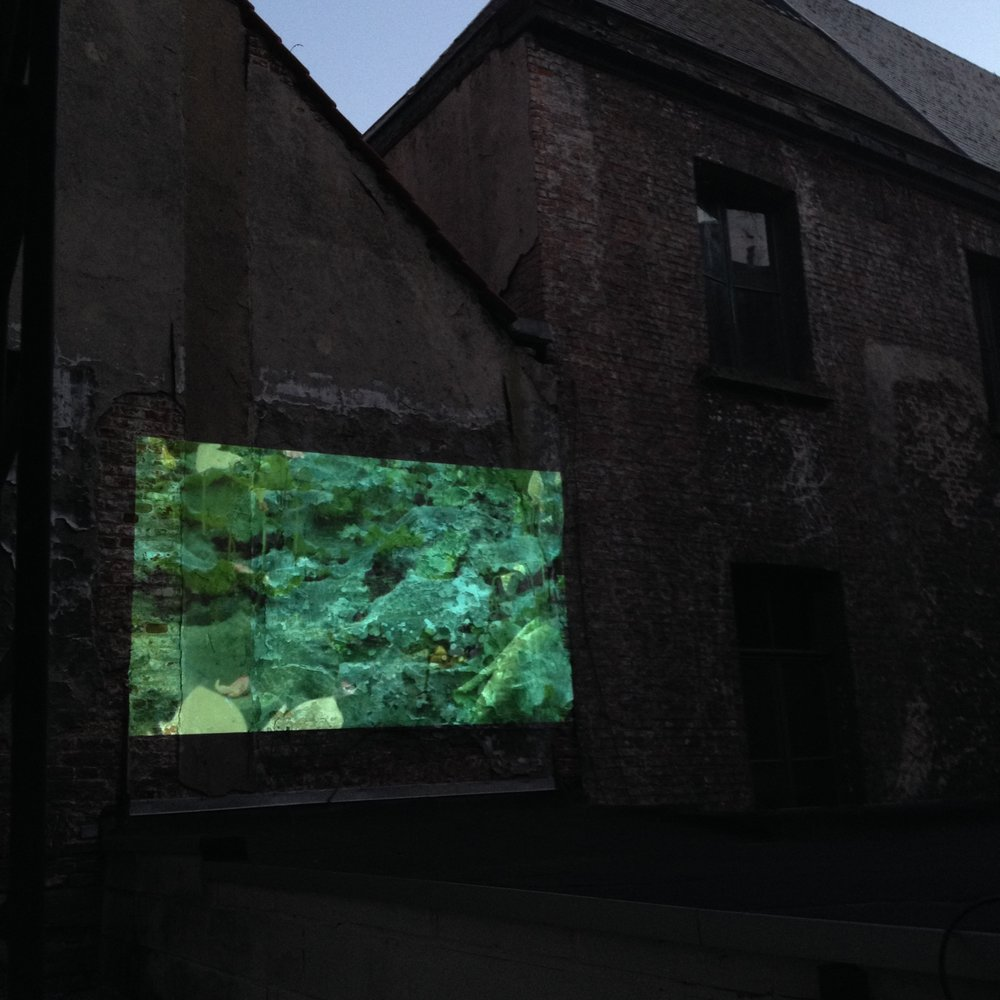 Public Place, Pubic Space, screening on the roof of our house where the neighbours windows would join.