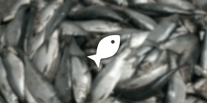 054_fish_icon