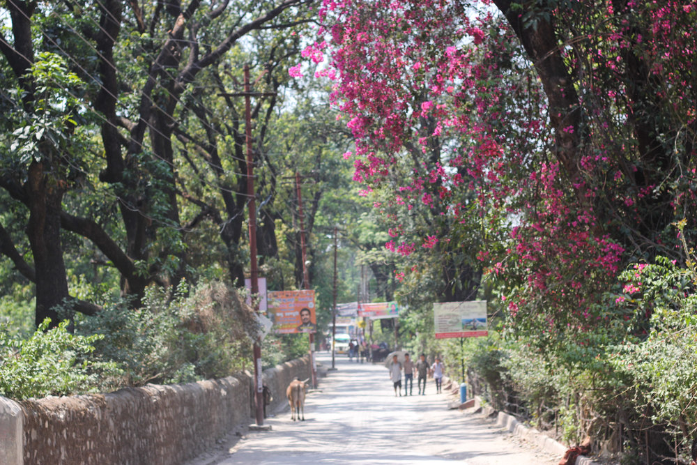 Rishikesh -