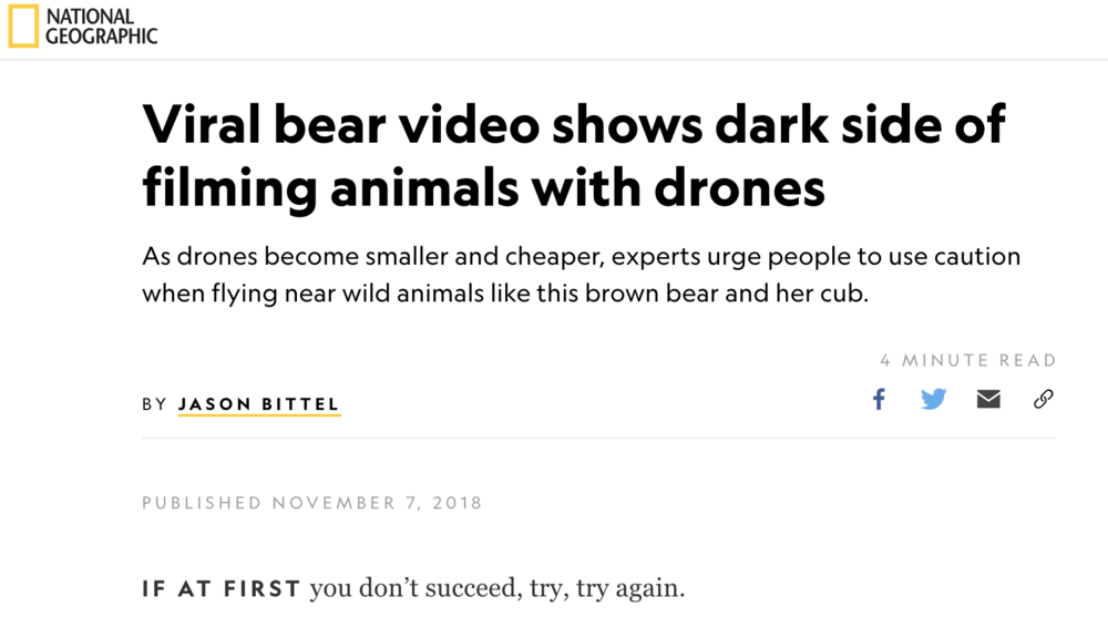2018 Nat Geo bears.png